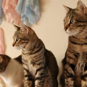猫の真空行動はいつまで続く?理由や対処法を解説