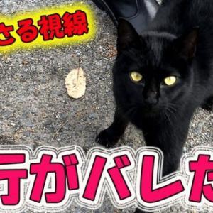 尾行がバレた!詰め寄られる探偵 猫の浮気調査