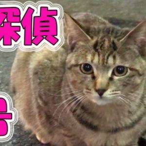 今日は、猫の相棒 猫探偵1号を連れていきます。