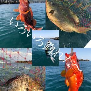狙いの魚が全部釣れた短時間欲張り釣行❣️