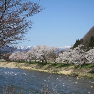 富山県朝日町 春の四重奏を見に行く 1