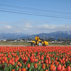 富山県朝日町 春の四重奏を見に行く 2