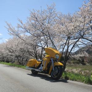 富山県朝日町 春の四重奏に行ってみた 3