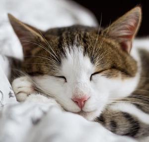 睡眠不足、睡眠障害、夜勤の方、熟睡出来ない方にオススメの遮光カーテン
