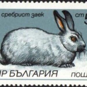 性病の一つである梅毒アラカルト-8.梅毒トレポネーマとウサギの睾丸-