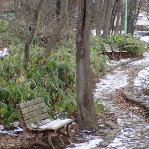 人影まばらな初冬の遊歩道