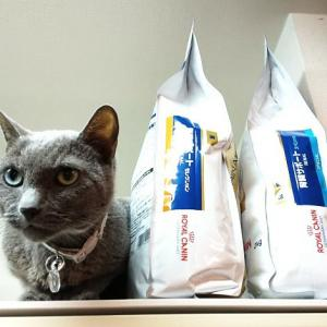 人のご飯より猫のご飯に四苦八苦