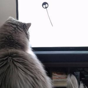 マイブームは猫に猫専用動画を見せることです