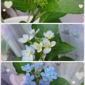 小さな蕾が咲きました。
