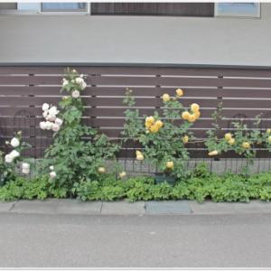 5月第3週の庭