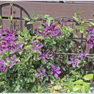 6月第2週の庭