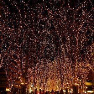 【イルミネーション】光のページェント