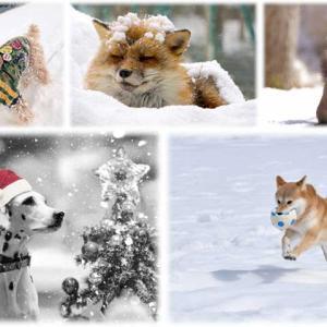 動物愛護法の罰則規定