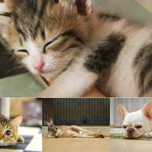 第二種動物取扱業申請の中身について