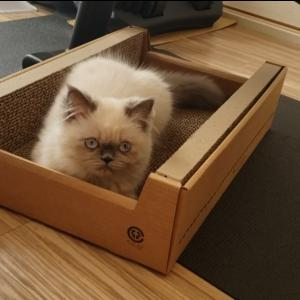 Petzoneの爪とぎAmazonボックス仕様を購入!猫におすすめか?