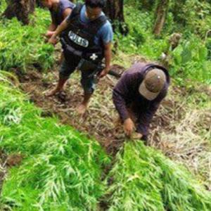 マリファナが有害薬物から除外され麻薬戦争中のフィリピンの反応は?