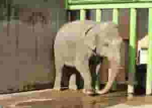諦めるってとても怖い『サーカスの象のお話』がんじ絡めの人生#61