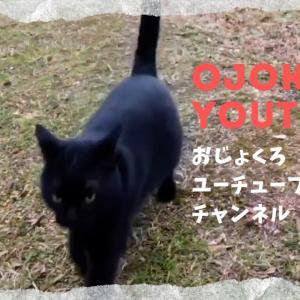 YouTube第二弾!記念すべき三作目!飼い主の元へ走ってきてくれる黒猫のクロさん
