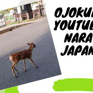 YouTube第四弾!記念すべき4作目!「奈良公園の朝の鹿さんの散歩について行ってみた!」