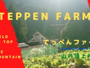 てっぺんファームの風景 柿を食べるスズメバチ