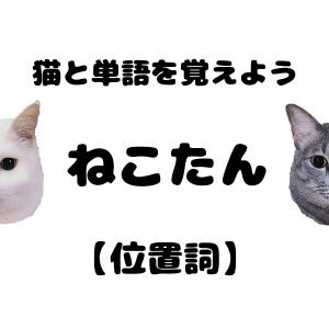 ねこたん15【位置詞】| 猫とタイ語単語を勉強しよう!