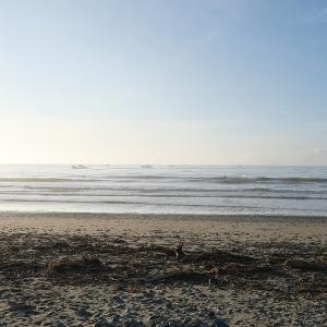 2019/08/07 片浜(牧之原市) サイズダウン