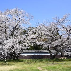 大里方面の桜2020(根岸家長屋門・桜リバーサイドパーク・切所沼)