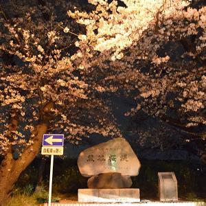 熊谷桜堤の静かな夜桜
