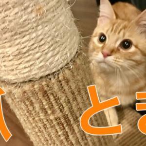 【猫のおすすめ爪とぎ】どこでもツメとぎタワー【マルカン】