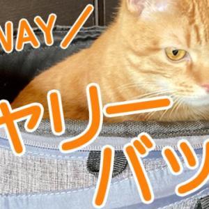 【おすすめ】猫用キャリーバッグの選び方と用途【クレート/リュック/3WAY】