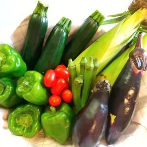 【野菜セット販売】儲かる一人農家、農業起業をめざすには?