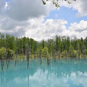 美瑛の青い池はなぜ青い?おすすめの行き方と営業時間