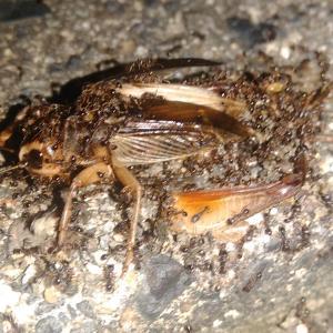 ゴキブリを食べてしまった か