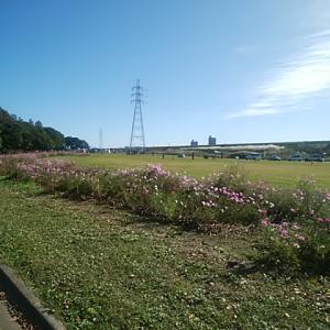 庄内緑地グリーンランニング20km