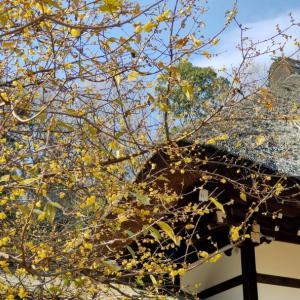 何時か咲かせる花が在るから頑張れるbyガンジー(KawasakiFrontale)