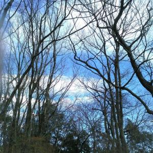 心と体を元気にしてくれる山散歩…ハイキングの効果