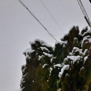 昨日は凍って今日は雪・・・