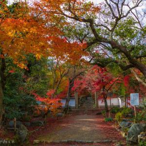 隠れた紅葉の名所 ー上桂の浄住寺へ