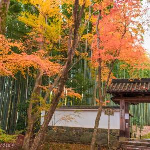 竹の寺 地蔵院~ 其の壱 ~<境内篇>