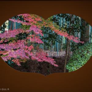 竹の寺 地蔵院~ 其の弐 ~<方丈・庭園篇>