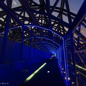 京都駅ビル 光のファンタジー2020 ② 《空中径路 STAR BRIDGE》