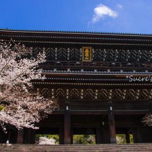 桜の知恩院へ