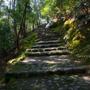 亀山公園から竹林の路へ