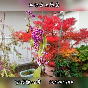 12月の庭*紫、赤、橙と
