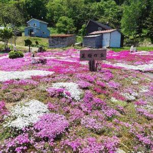 【無料公開に感謝】倶知安町にある三島さんちの芝ざくら庭園