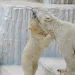 初めてのナイトズー【ZOO】天王寺動物園へ行ってみた