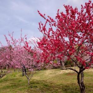桃の節句 祝福型ヒーリング
