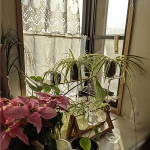 出窓にある植物園の風景