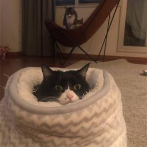 ニトリのペットベッド