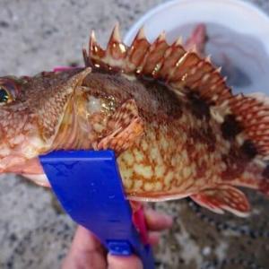 2021年初釣り釣果と使用した道具・ワーム紹介【カサゴが釣れるワーム】